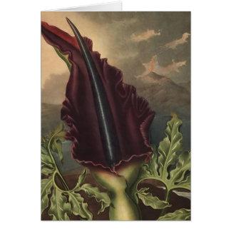 Dracunculus Vulgaris Card