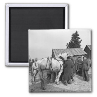 Draft Horse Auction, 1930s 2 Inch Square Magnet