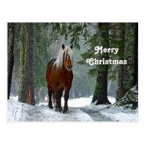 Draft Horse Christmas Postcard