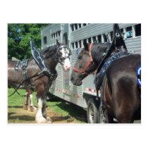 Draft Horse Duo Postcard