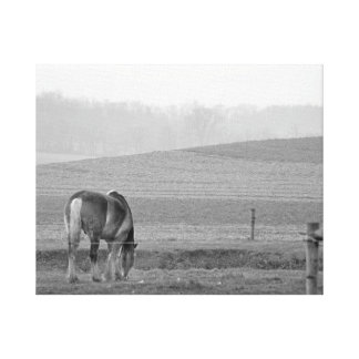 Draft Horse in Black and White Canvas Print