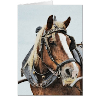 Draft horse in harness birthday card