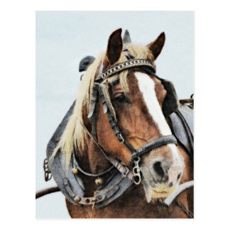 Draft horse in harness postcard