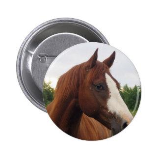 Draft Horse Photo Round Button