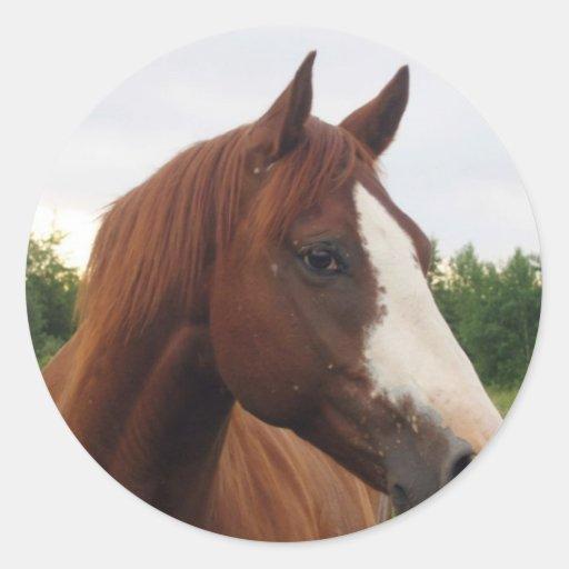 Draft Horse Photo Stickers