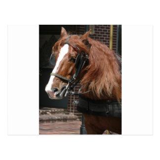 Draft Horse Postcard