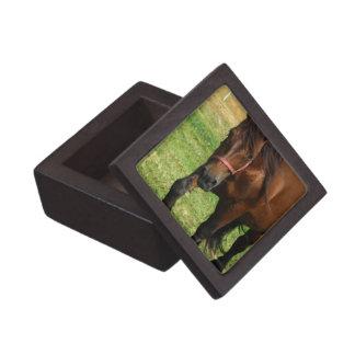 Draft Horse Premium Gift Box