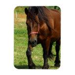 Draft Horse Premium Magnet Flexible Magnet