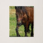 Draft Horse Puzzle