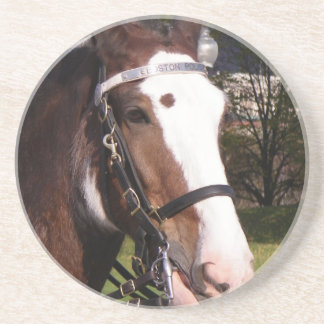 Draft Horse Rescue Coasters