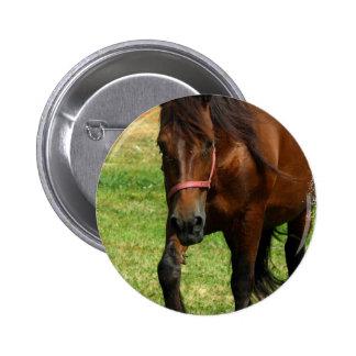 Draft Horse Round Button