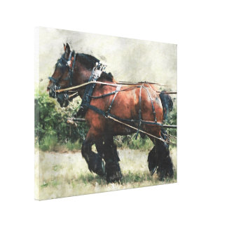 Draft horse team in harness canvas print