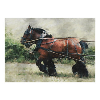 Draft horse team in harness poster