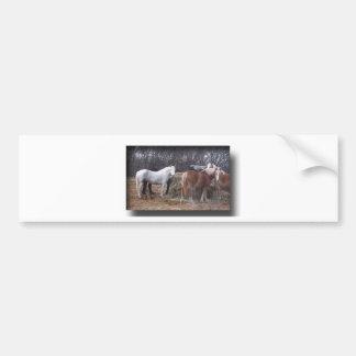 Draft horses eating bumper sticker