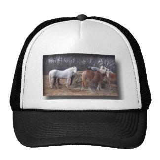 Draft horses eating trucker hat