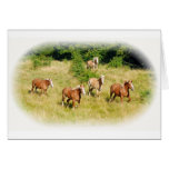 Draft horses in field greeting card