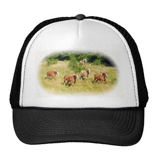 Draft horses in field hats