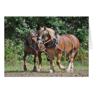 Draft horses in harness birthday card