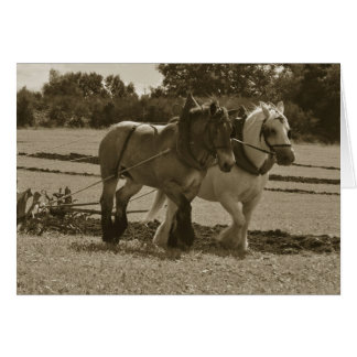 Draft horses plowing birthday card
