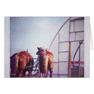 Draft Horses Ready For Work Card