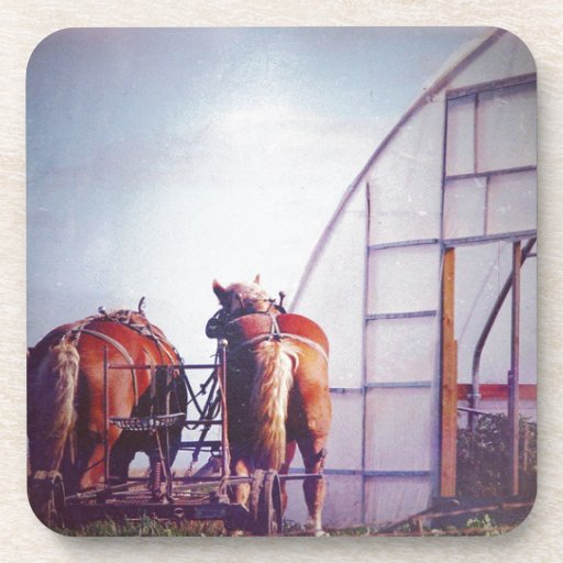 Draft Horses Ready For Work Drink Coaster Zazzle