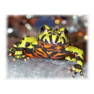 Drago Oriental Fire Belly Toad Postcards