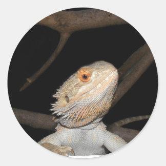 Dragón barbudo 2 pegatina redonda