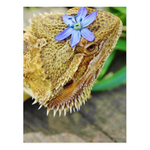 Dragón barbudo bonito tarjetas postales
