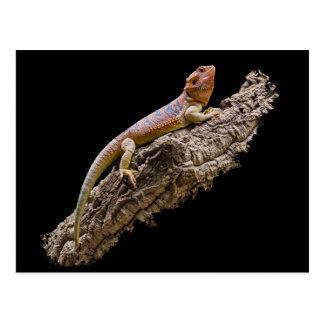 Dragón barbudo central (vitticeps de Pogona) Postales