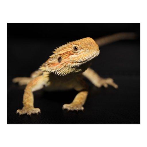 Dragón barbudo curioso tarjeta postal