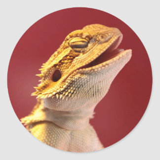 Dragón barbudo de risa pegatina redonda