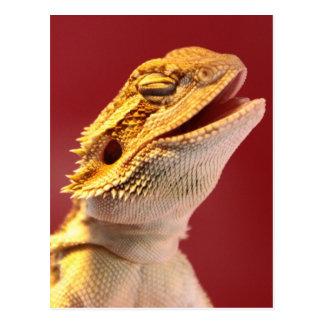 Dragón barbudo de risa tarjeta postal