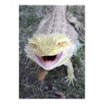 Dragón barbudo feliz estupendo comunicado