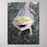 Dragón barbudo feliz estupendo impresiones