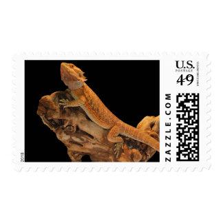 Dragón barbudo - las cosas están mirando para timbre postal