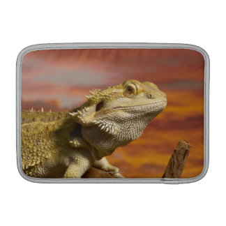 Dragón barbudo (Pogona Vitticeps) en rama, Funda Para Macbook Air