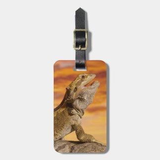 Dragón barbudo (Pogona Vitticeps) en roca, Etiquetas Para Maletas