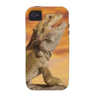 Dragón barbudo (Pogona Vitticeps) en roca, iPhone 4/4S Carcasa