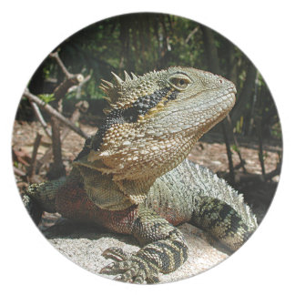 Dragón de agua australiano plato de comida