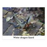 Dragón de agua hermoso postal