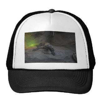 Dragón de Komodo Gorra