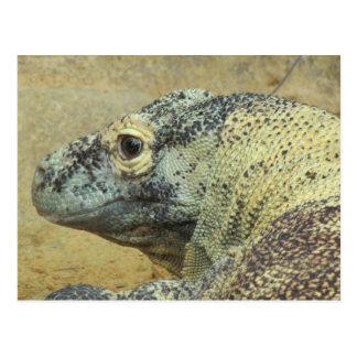 Dragón de Komodo Postal