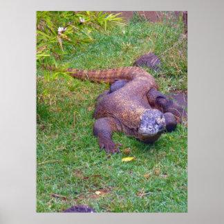 Dragón de Komodo Póster
