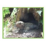 Dragón de Komodo que sale de su hogar debajo de ár Postales