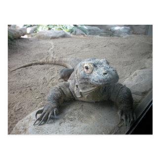 Dragón de Komodo Postales