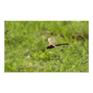 Dragón de vuelo impresion fotografica