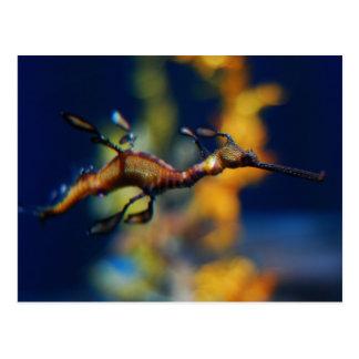 dragon flight postcard