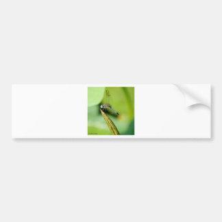 Dragon Fly Bumper Sticker