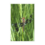 Dragon Fly in Grass Canvas Prints