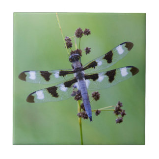 Dragon fly perched on grass, Canada Ceramic Tile